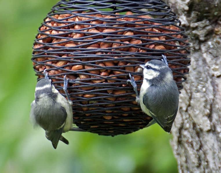 _bird_feeder_