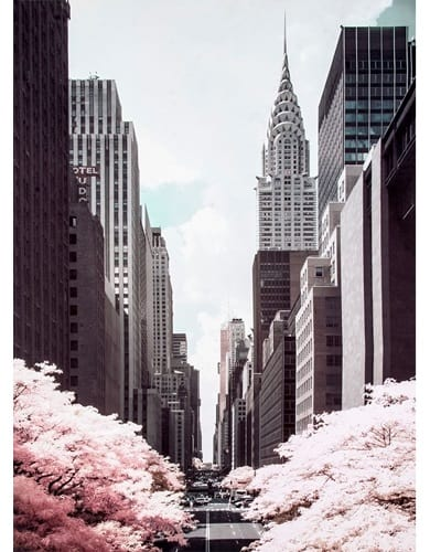 pink blossoming trees under the skyscrapers of 42nd street in New York