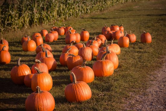 Things you need this Halloween - pumpkins