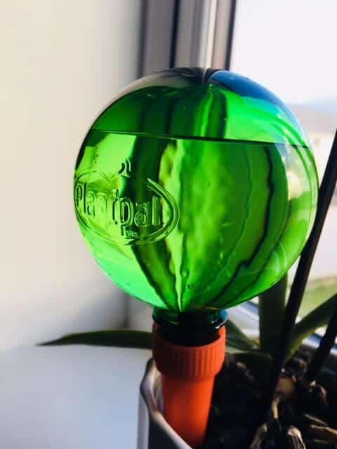 Planpal globe in use