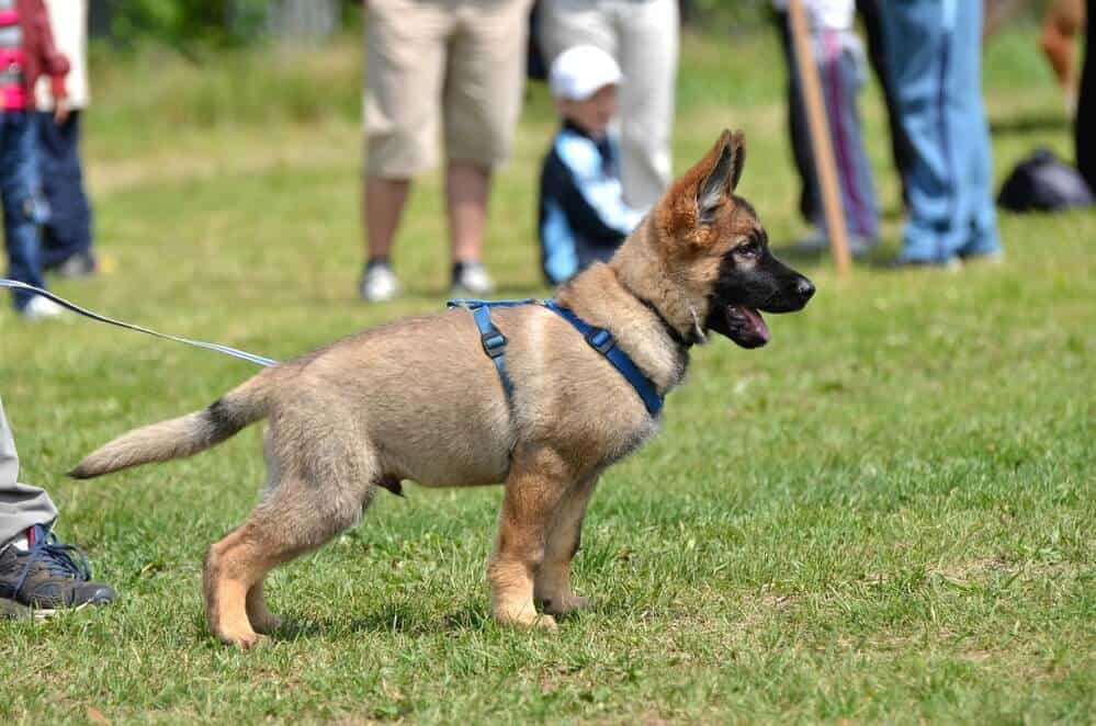 A beginner's guide to training a puppy