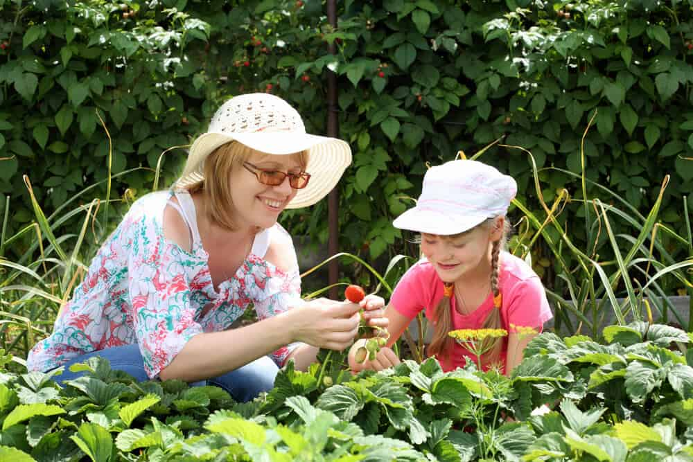 Beat Summer Holiday Boredom By Getting In The Garden