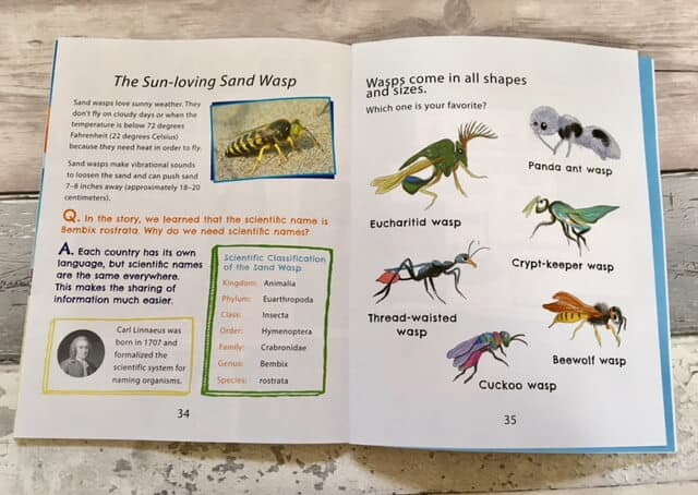The Beedog: An Insect Discovery in Portugal
