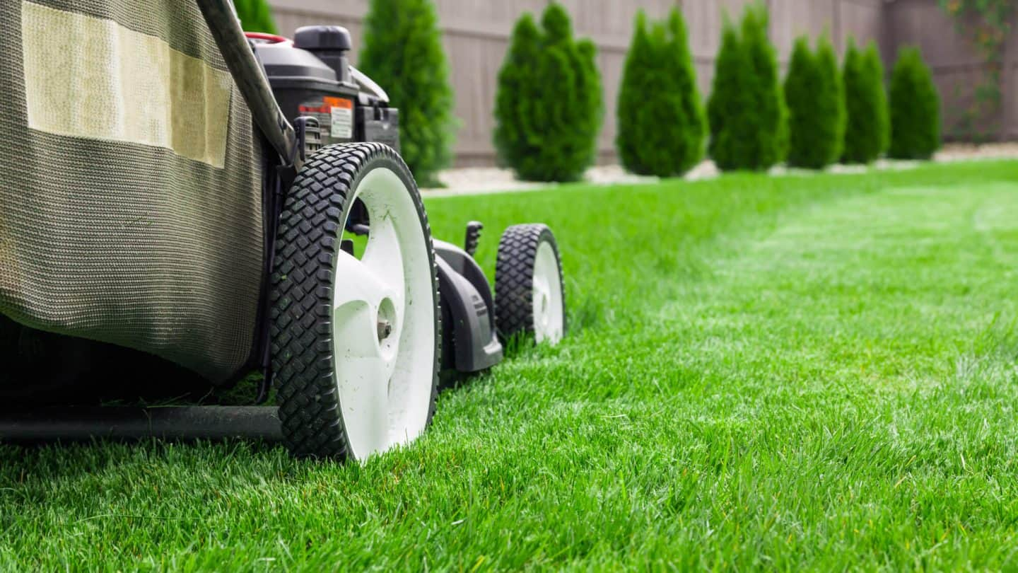 5 Lawn Care Tips Even The Pros Use To Make your Yard Look Amazing