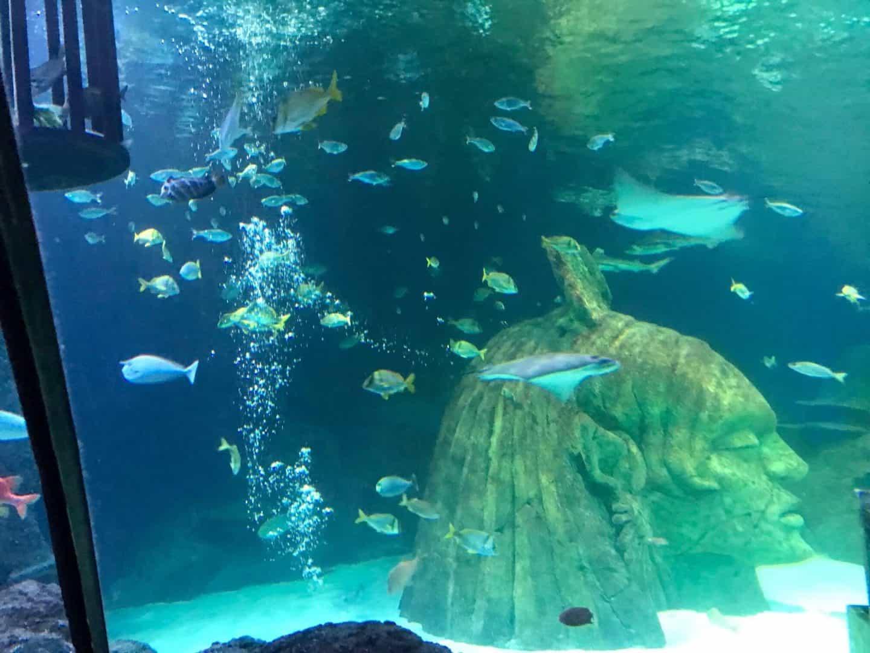 Sea-Life-Manchester-Aquarium
