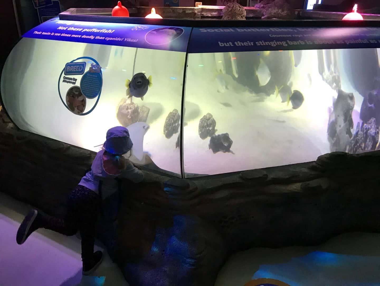 Sea-Life-Manchester-Aquarium puffer fish tank