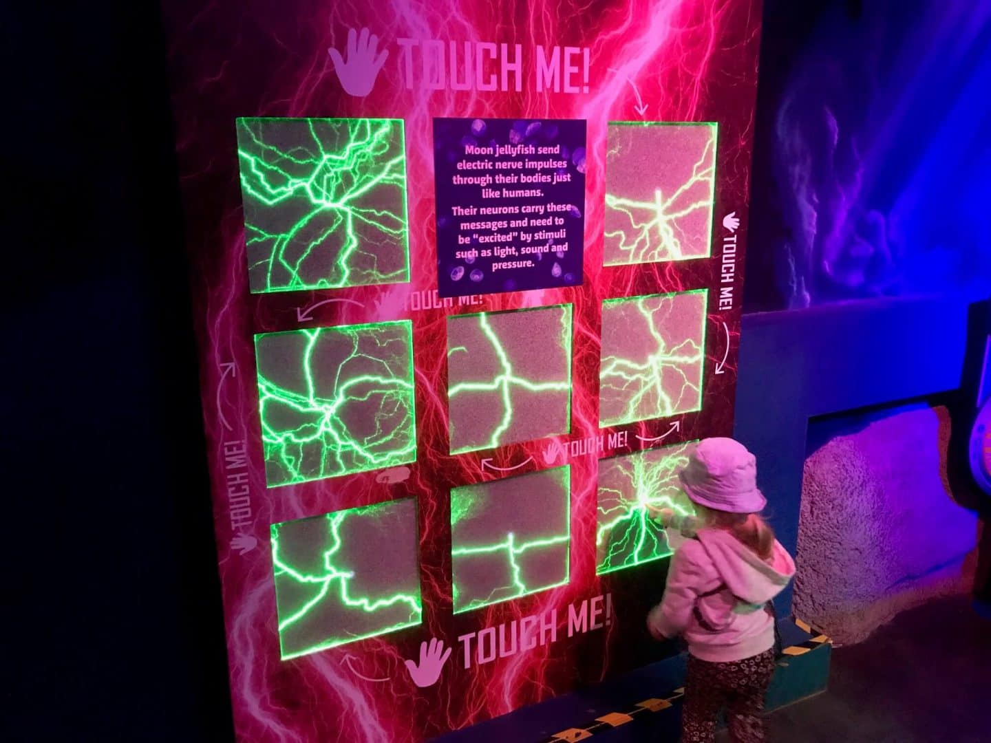 jellyfish-touch-me-board