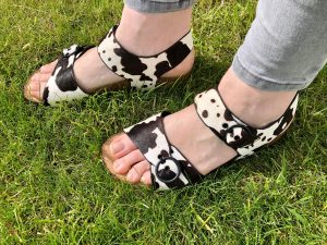 wearing the cow print sandals from Hotter