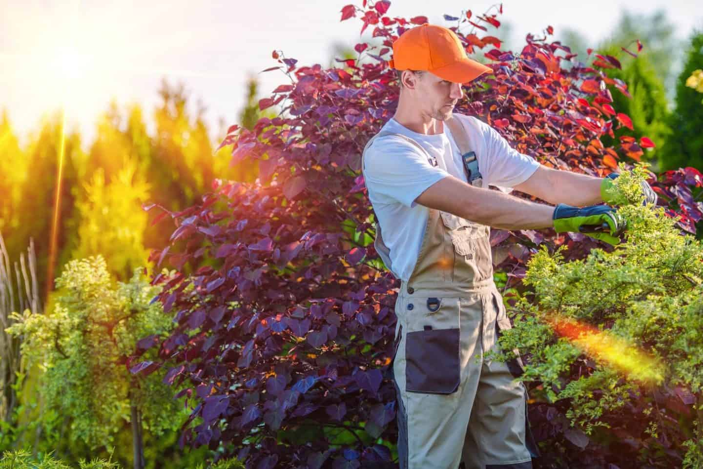 Keeping your trees and shrubs cut back and tidy will deter potential burglars from hiding in them.