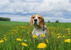 How to Stop Your Dog from Gaining Excess Weight