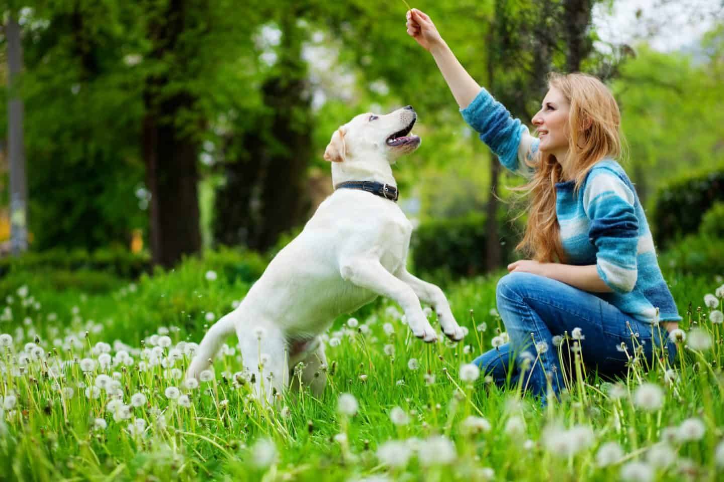 Top Tips on Choosing the Right Dog for You
