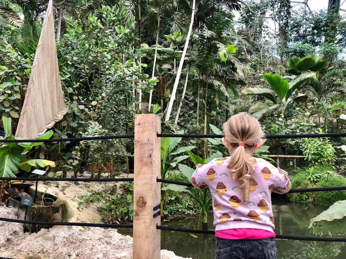 Inside the Rainforest Biome at Eden Project