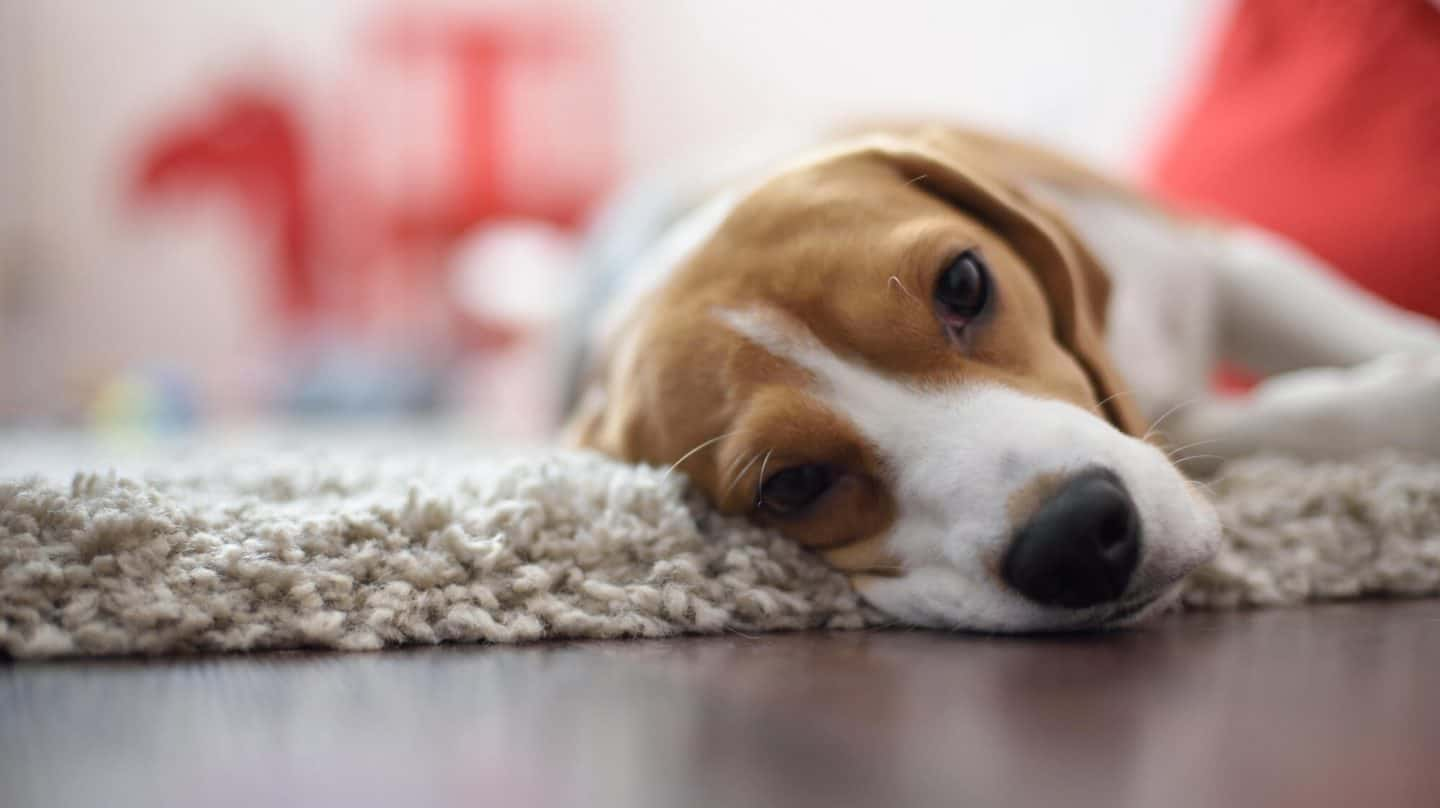 Top Tips: How We Can Do More With Our Pets