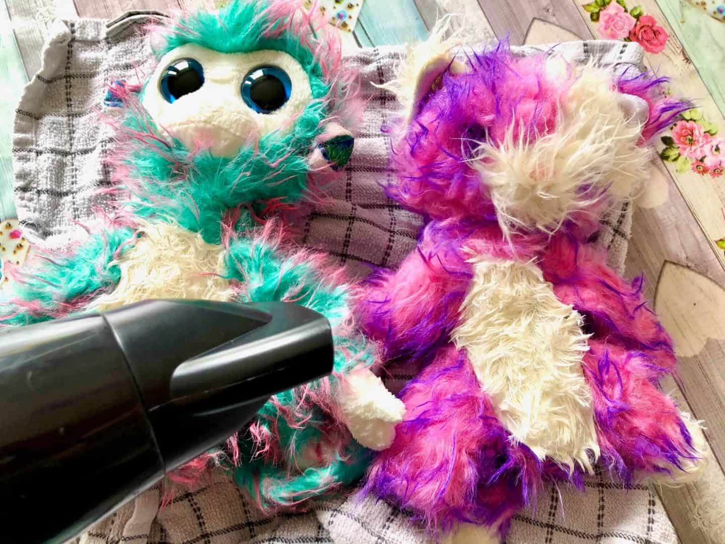 blow drying the Scruff-a-Luvs with a hair drier