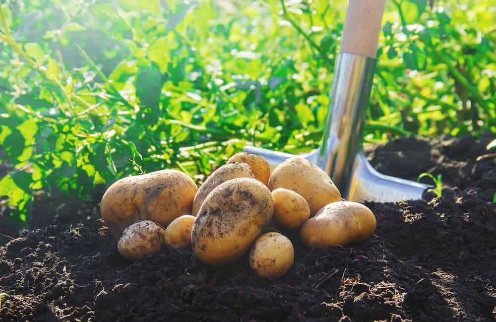 All-Natural Solutions to Dealing with Pests in Your Garden