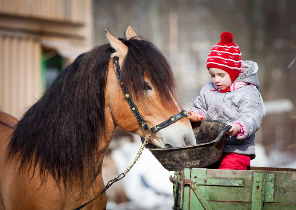 Why Choose A Pet That Lives At A Shelter - child feeding a pony
