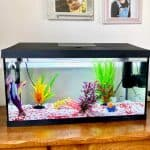 Top Tips On How To Set Up and Care For a Tropical Fish Tank