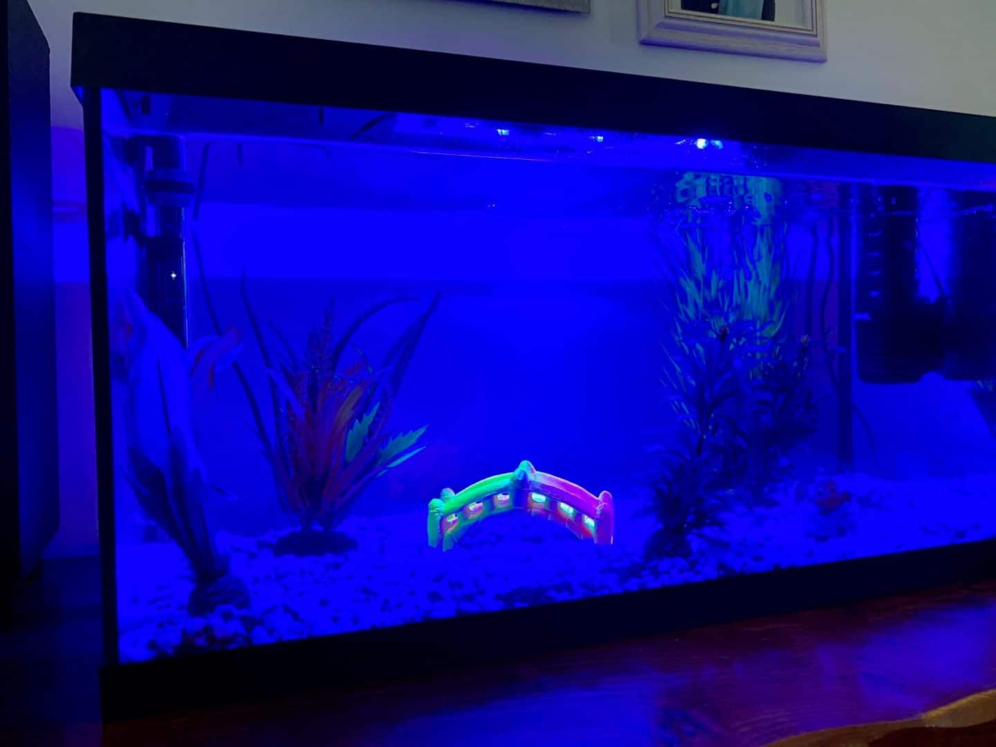 fish tank by night glowing blue
