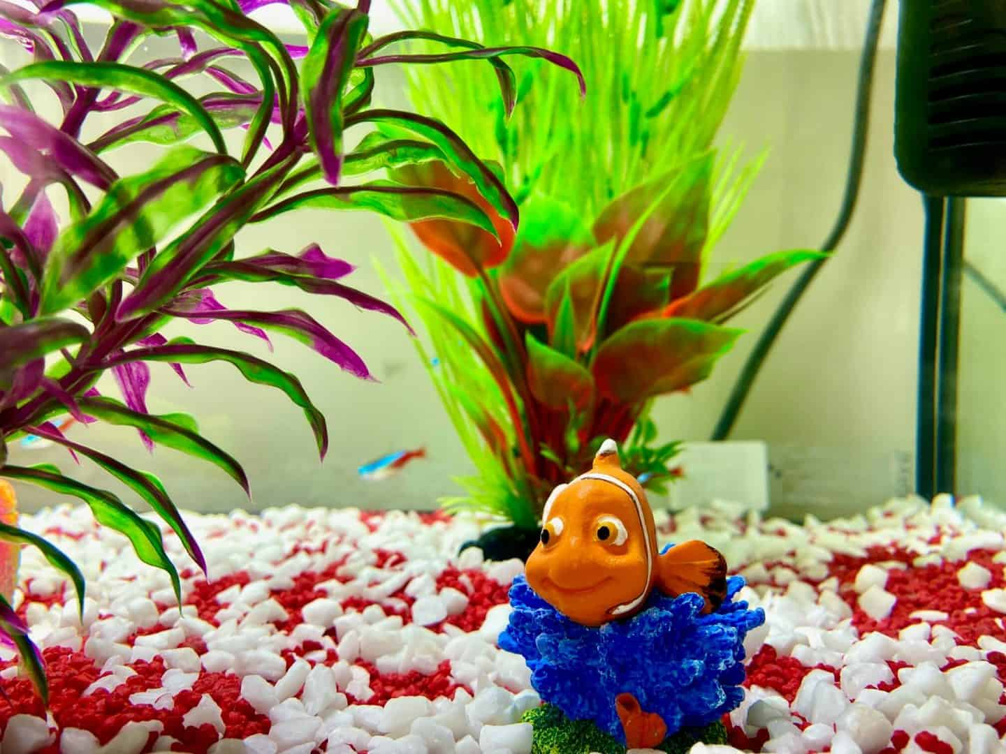 setting up a fish tank with decorations