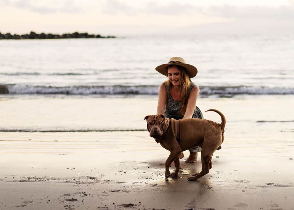 Taking Your Dog Abroad? Here Are 8 Things You Need to Know