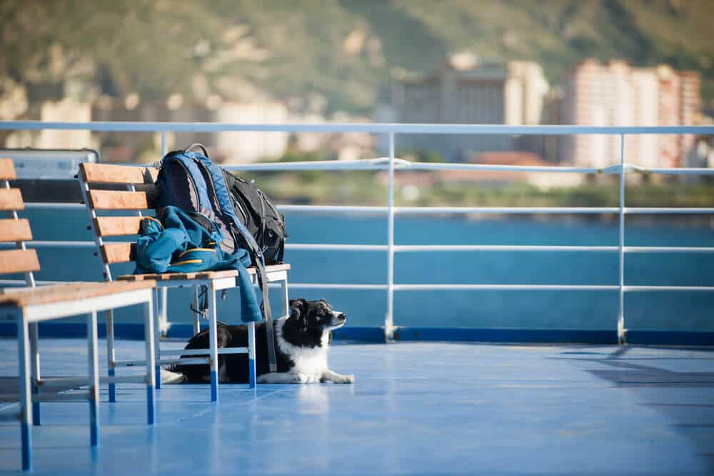 Travelling with a Dog in a Post COVID-19 World