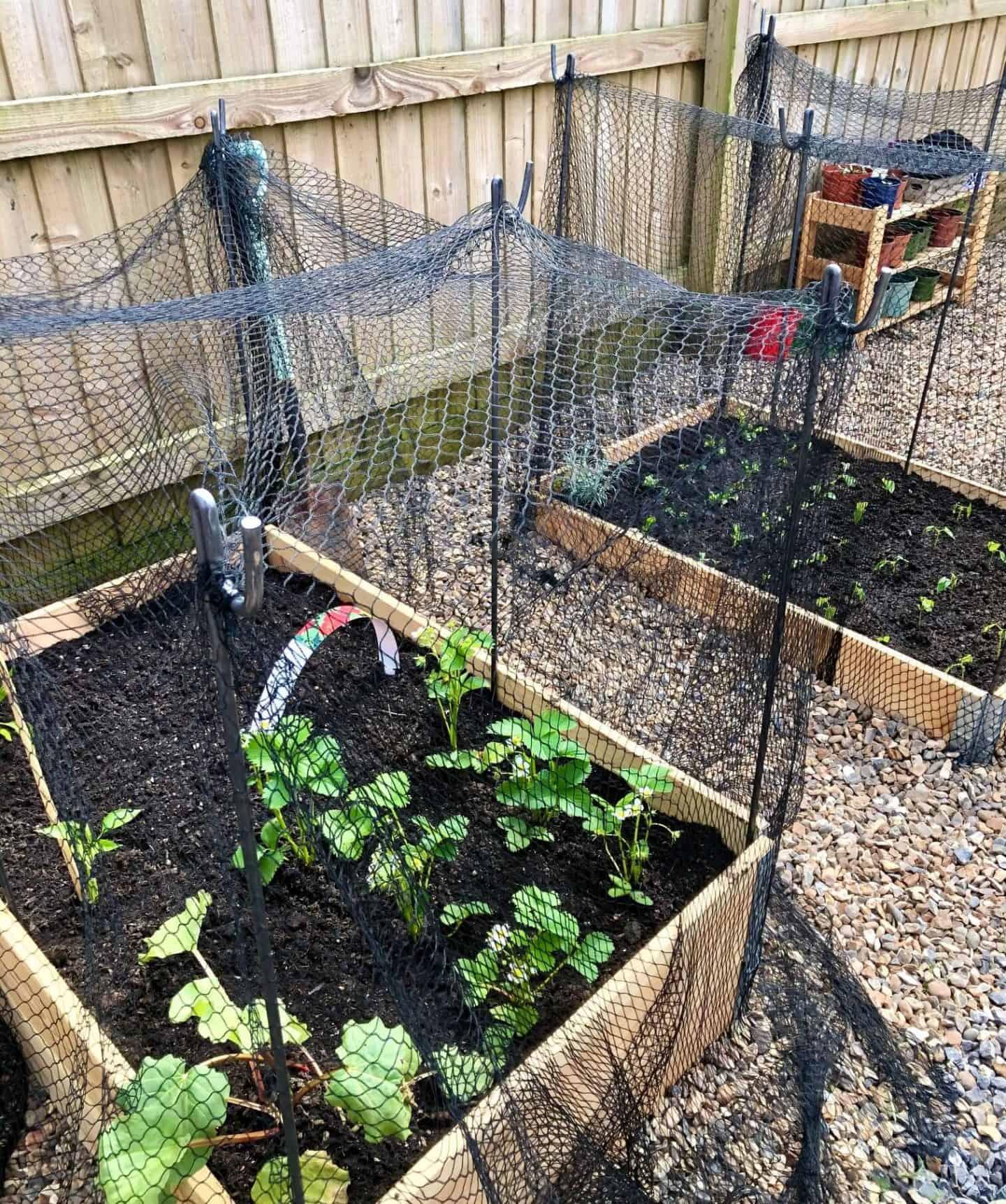 veg plots