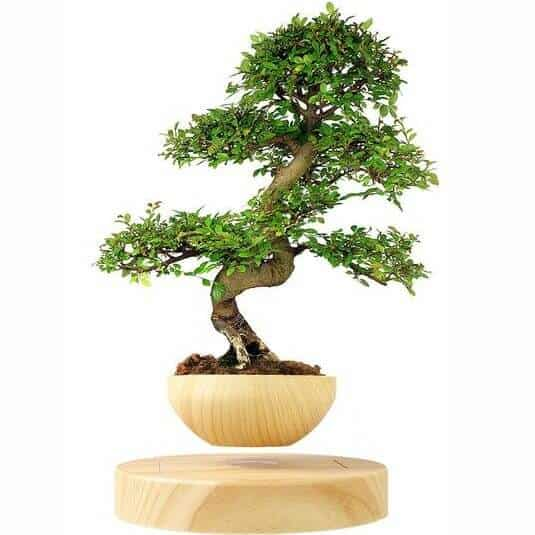 Stunning Tranquil Contemporary Decor For Your Home - Floating Bonsai